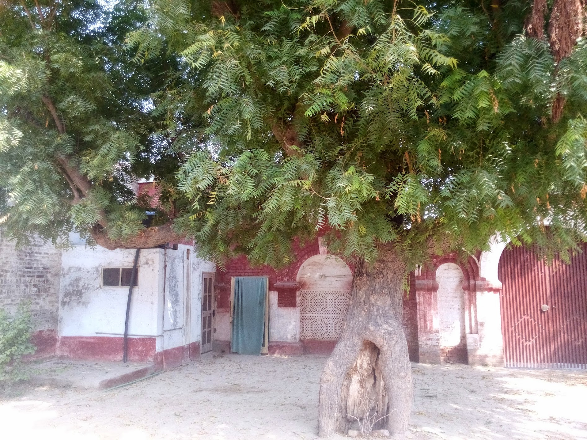An old tree