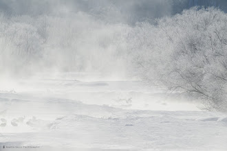 Photo: Morning Dance - As the mist cleared after a -26ºC dawn, the red-crowned cranes celebrated with a dance.
