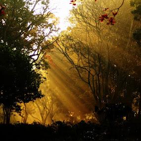 light by Dhruv Ashra - Nature Up Close Trees & Bushes