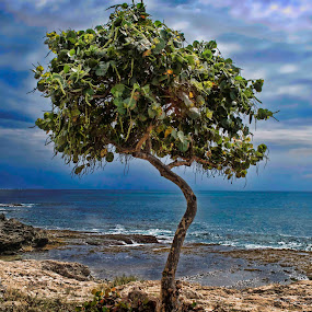 Mystic Tree by Adriano Sabagala - Artistic Objects Other Objects