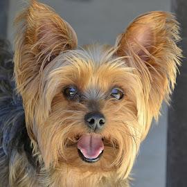 Mr. Doobie by Fran Juhasz-Mckitrick - Animals - Dogs Portraits