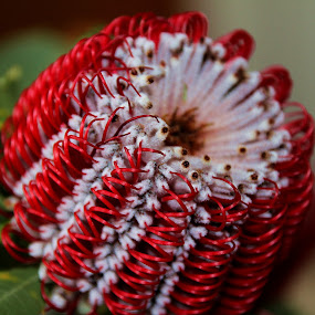 by AB Rossouw - Nature Up Close Flowers - 2011-2013