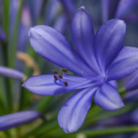 by Nil Jay - Flowers Flower Gardens (  )