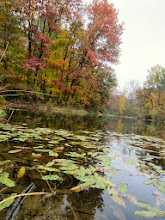 Photo: Leaves fallen in an autumn pond at Hills and Dales Metropark in Dayton, Ohio.