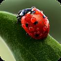 Ladybug Pack 2 Live Wallpaper icon