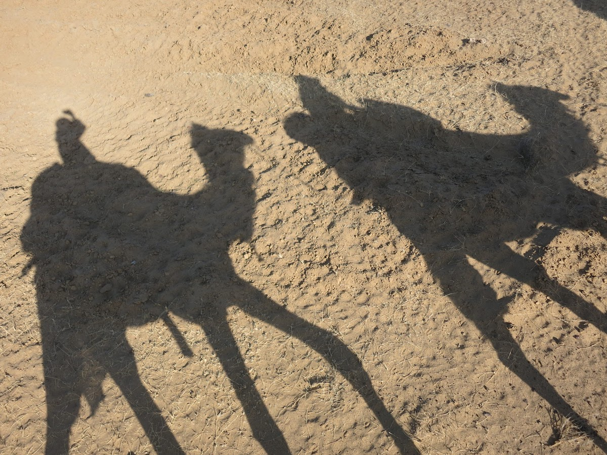 India. Rajasthan Thar Desert Camel Trek. Long shadows under the afternoon sun