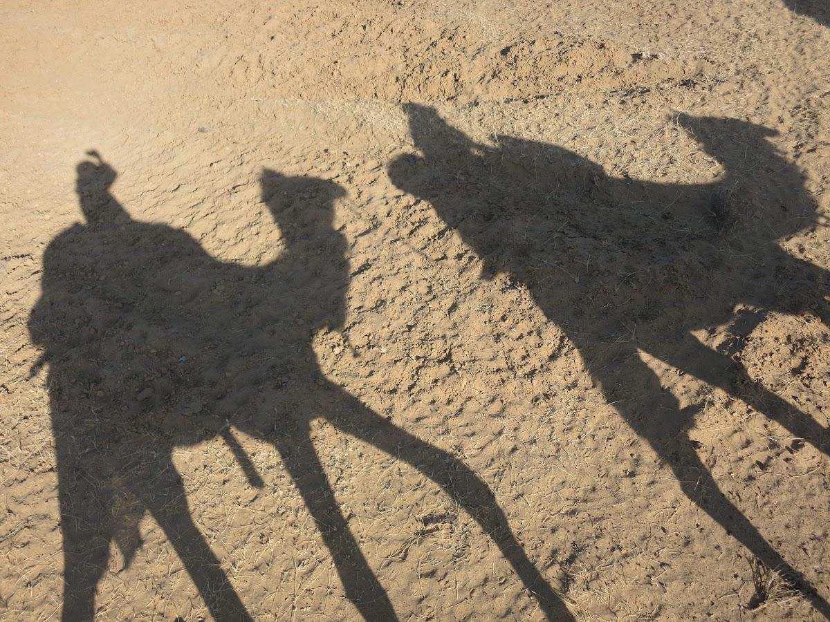India. Rajasthan Thar Desert Camel Trek. Long shadows under the afternoon sun