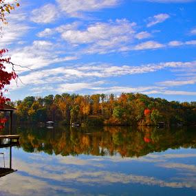 SML Fall Leaves by Jennifer Lamanca Kaufman - Nature Up Close Leaves & Grasses ( reflection )