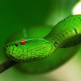 by Joe Joe - Animals Reptiles
