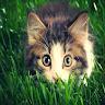 com.shake_se.live_wallpaper.cat_live_wallpaper