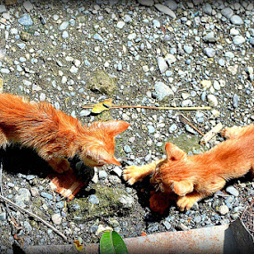 Sibling Rivalry by Ne-z Lim - Animals - Cats Kittens ( cat, nature, playing kittens )