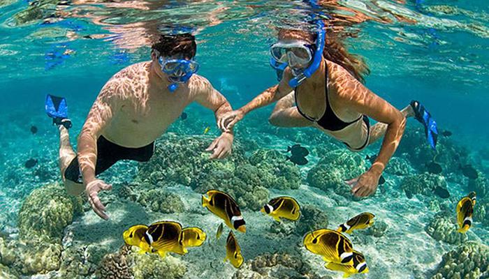Lặn ngắm san hô: Cẩm nang du lịch Cù Lao Chàm đầy đủ nhất từ TourSelf - 11
