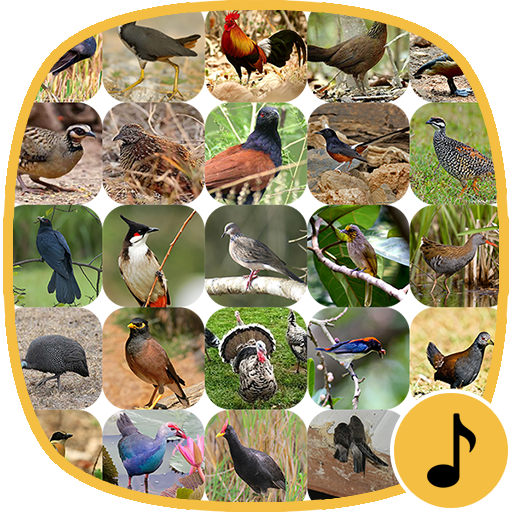 Appp.io - Bird Calls file APK for Gaming PC/PS3/PS4 Smart TV