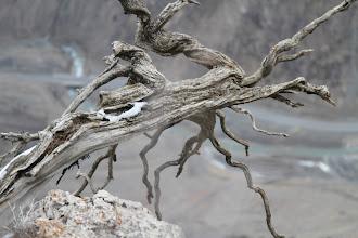 Photo: Nuostabūs nepaliesti vaizdai ant kalno viršaus.  Beautiful and untouched nature on top of the mountain.