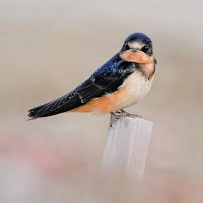 Bird Heaven by Andy Nguyen - Animals Birds ( bird, nature, wildlife, portrait )