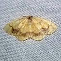Horned Spanworm Moth