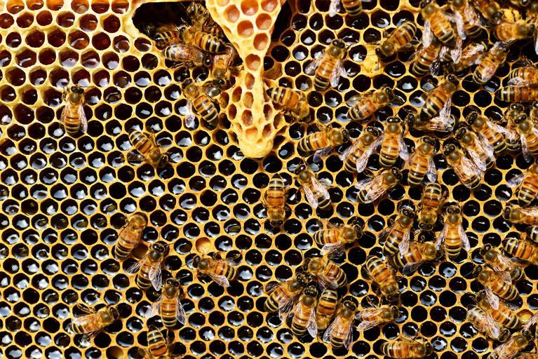 Free Images - SnappyGoat.com- bestof:Tested Queen 80 1 Select Tested Queen 1.00 1 Breeding Queen l.SO 1-Comb Nucleus,no queen 1.00 J. L. STRONG, 204 East Logan St., Clarinda, Iowa. 2SAtf Please