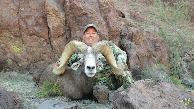 """Photo: Larry Spillers from Ennis TX with Larry's 2012 AZ Super Raffle Sheep.  We nicknamed this ram the """"white nose ram"""".  Larry had a seriuos ankle injury prior to the hunt and wasn't at 100% but had a lot of heart and hiked around like a trooper.  This is the third largest Nesloni ram harvested on this special tag."""