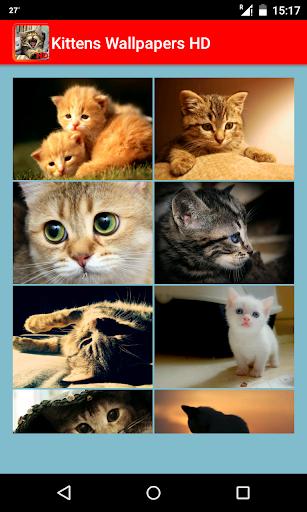 Kittens Wallpapers