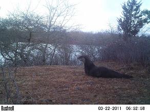 Photo: Long Cove Pond - otter meditation :)