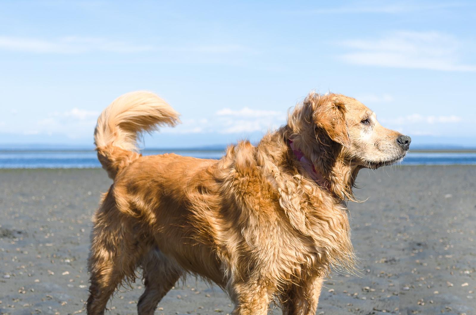 Perros sanos con alimento balanceado