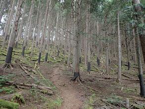 植林の間伐帯