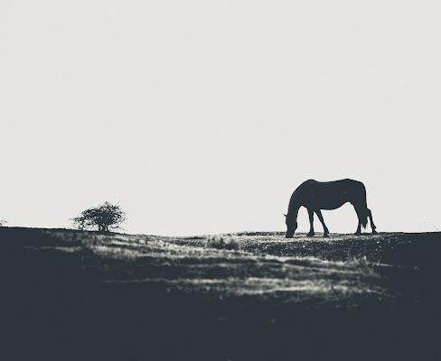 horse di Massimiliano zompi