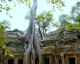 Photo: Completed in 1186, Ta Prohm was built to house the remains of the king's mother.  The trees are silk cotton trees.  This was also in the movie.