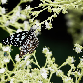 by Jaydev Chakraborty - Nature Up Close Flowers - 2011-2013 ( butterfly, flowers )