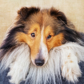 by Jane Bjerkli - Animals - Dogs Portraits