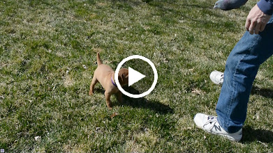 Video: Pawing pigeon then thought sniffing Lane's shoes was better then the pigeon itself, as she walks across it!