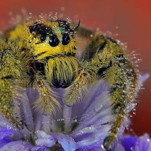 spider 12 pix.jpg