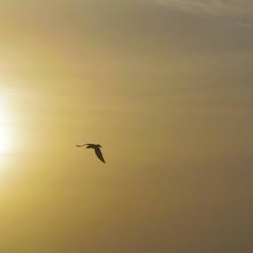 My photography................................. by Ajin Ponipas - Landscapes Sunsets & Sunrises