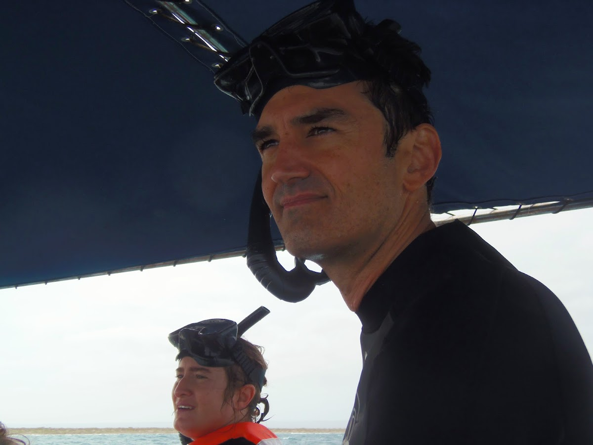 Balayage de l'océan pour repérer les baleines