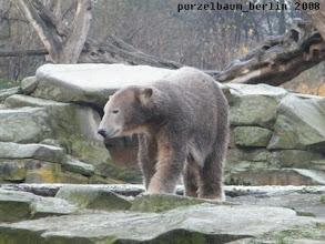 Photo: Knut schaut sich nun auf seiner Anlage um ;-)