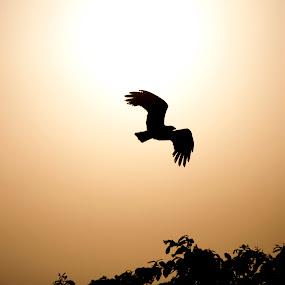 Flying High by Claude Veigas - Animals Birds ( claude veigas pwctaggedbirds )