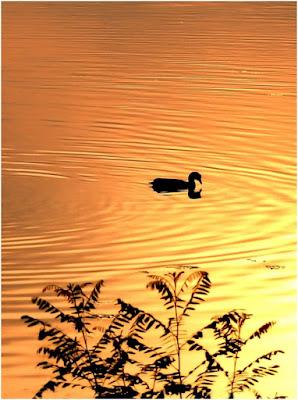 Duck reflex di blanche7
