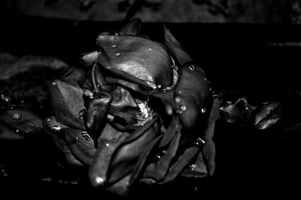 Black Rose Immortal di shivanottetempo