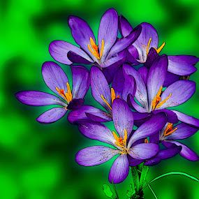 Posy of Crocuses by Deleted Deleted - Nature Up Close Flowers - 2011-2013