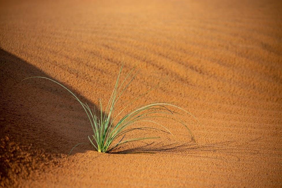 Wahiba Sands, Oman, pustynia, roślinność