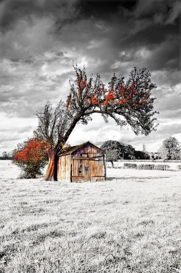 Fabulous old barn! by Craig Richards - Landscapes Prairies, Meadows & Fields ( leaning, old, b&w, tree, barn )
