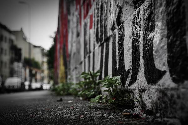 colonizzazioni urbane di PH Federico Pilli