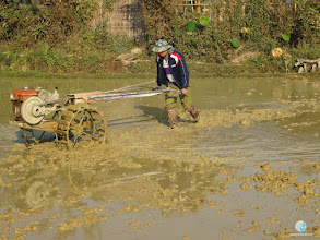Photo: Land preparation using walking tractor
