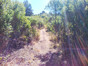 Photo: The trail to the ridge at signpost 24