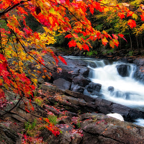 Fall Waterfall by James Wheeler - Landscapes Forests ( water, canada, can, waterfall, d5000, fall waterfall, ontario, leaves, algonquin colors, photo, photography, picture, red, 2011, oxtongue rapids park, nikon, geotagged, landscapes, algonquin park, rocks, september, river )