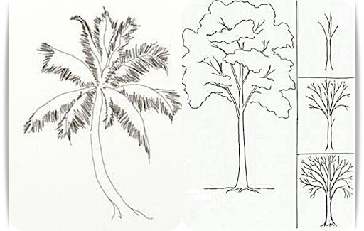 玩免費教育APP|下載Learn to Draw Trees app不用錢|硬是要APP