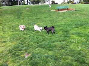 Photo: Malia in Lafayette Park, San Francisco, CA