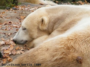 Photo: Ein Tag zum Durchschlafen ?