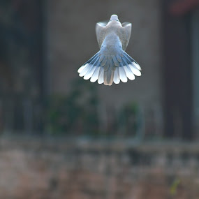 Flight by Vaibhav Purohit - Animals Birds