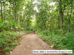 Photo: Akses jalan dengan pemandangan hutan nan eksotik